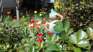 Frühlings-Zwerg
